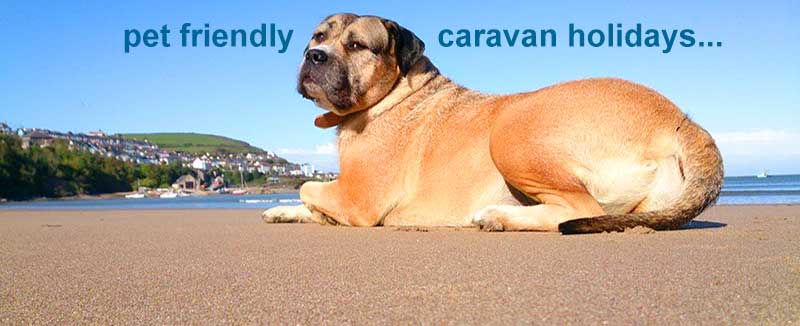 Pet Friendly Caravan Hire